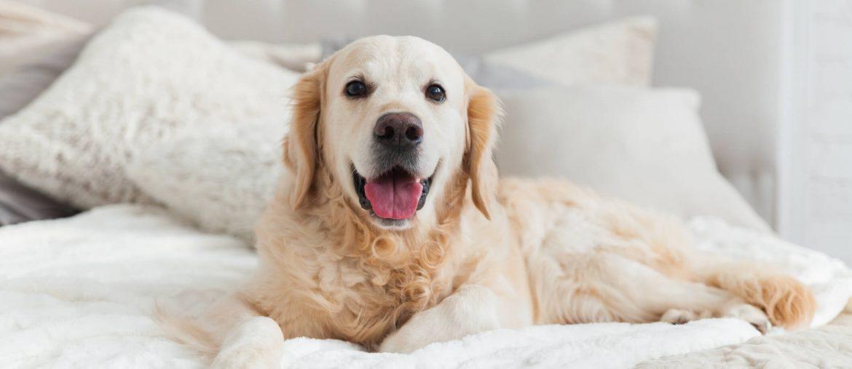 Hotel que aceita cachorro: conheça 6 das melhores opções