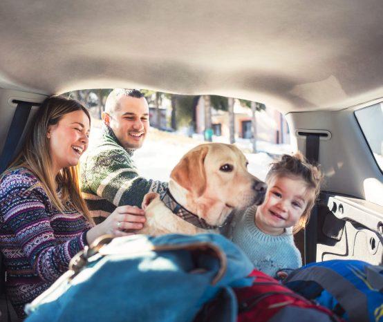 Veja 7 dicas para viajar com o cachorro de carro