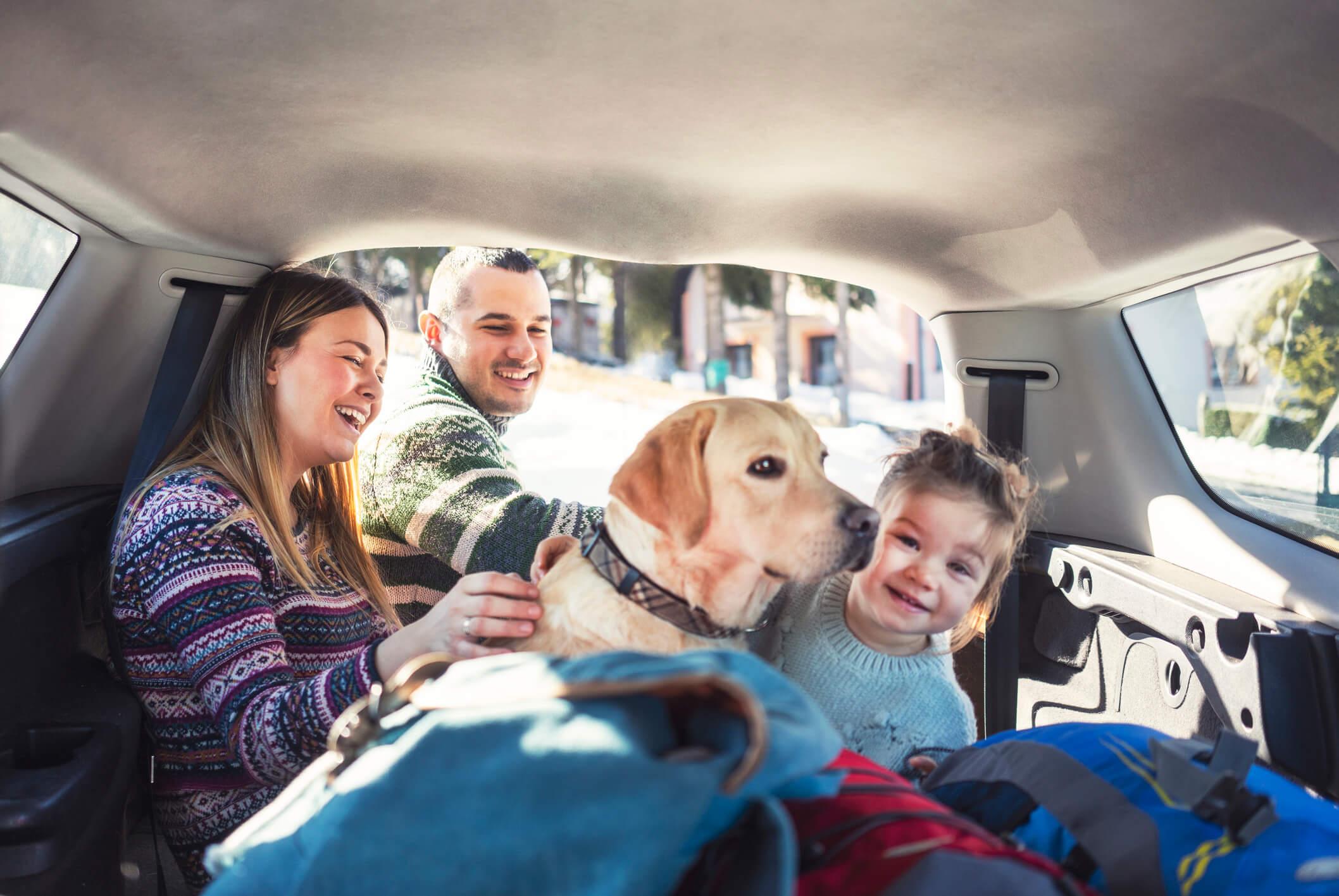 viajar com cachorro de carro