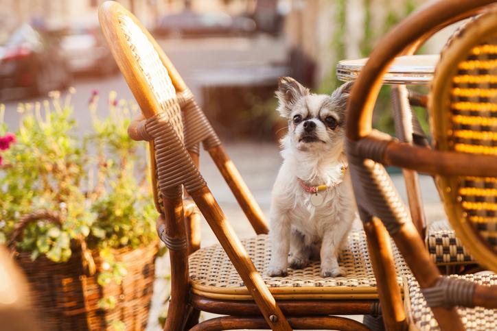 iStock 1179029321 Conheça 4 lugares que aceitam cachorros ou outros pets