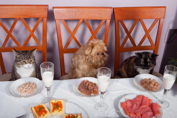 iStock 136774823 Conheça 4 lugares que aceitam cachorros ou outros pets