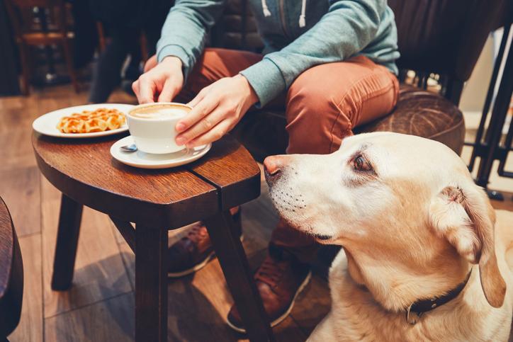 iStock 912133246 Conheça 4 lugares que aceitam cachorros ou outros pets