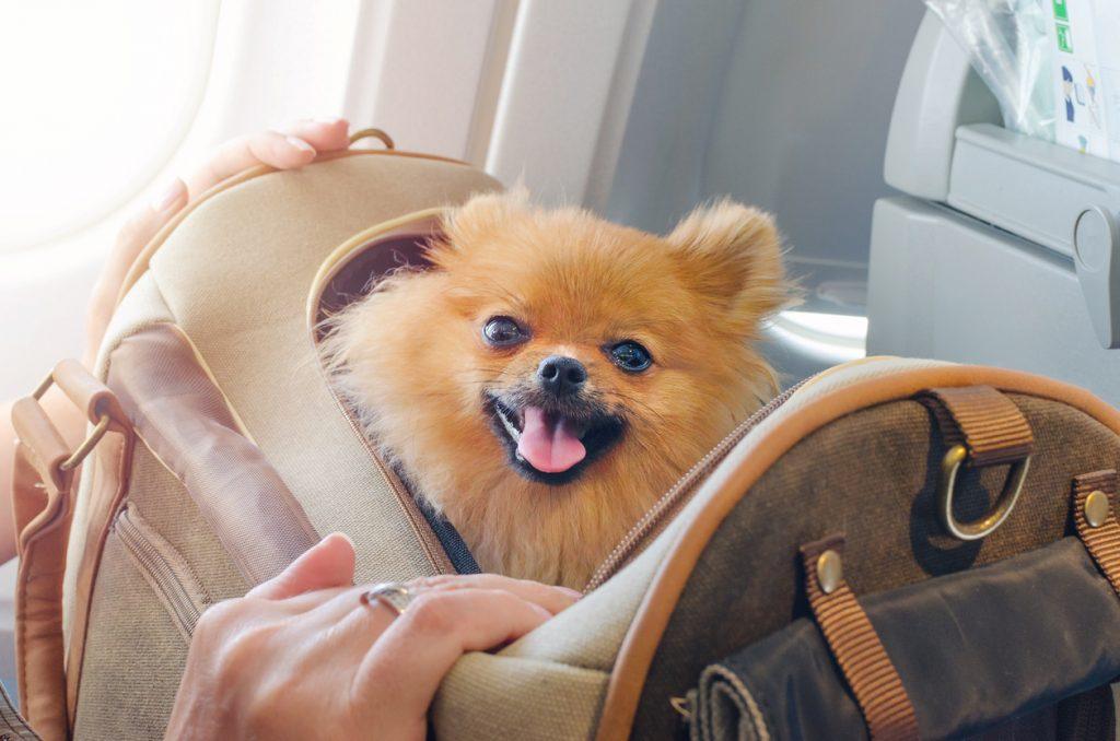 iStock 1011834458 1024x678 Quer viajar com cachorro ou gato? Leia o guia definitivo de viagens com pet!