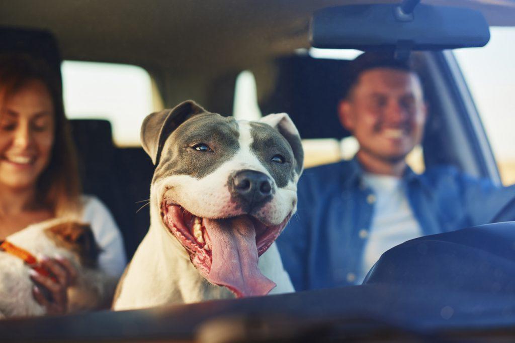 iStock 1188630116 1 1024x683 Quer viajar com cachorro ou gato? Leia o guia definitivo de viagens com pet!
