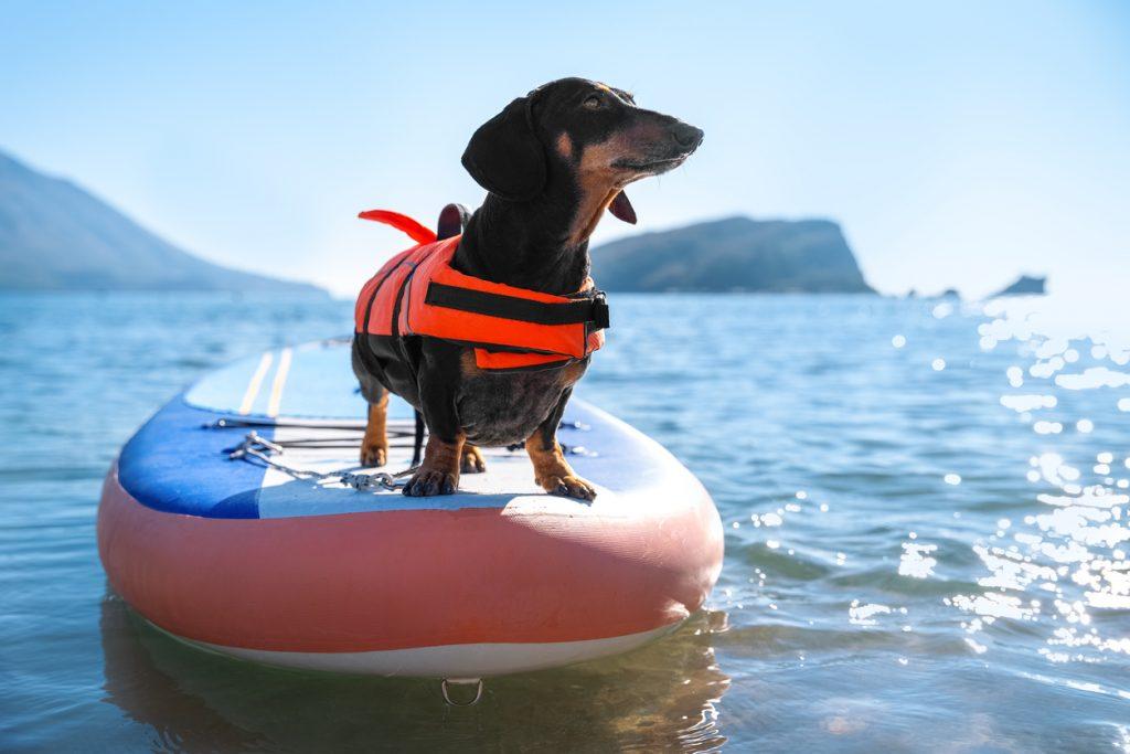 iStock 1297180041 1024x683 Quer viajar com cachorro ou gato? Leia o guia definitivo de viagens com pet!