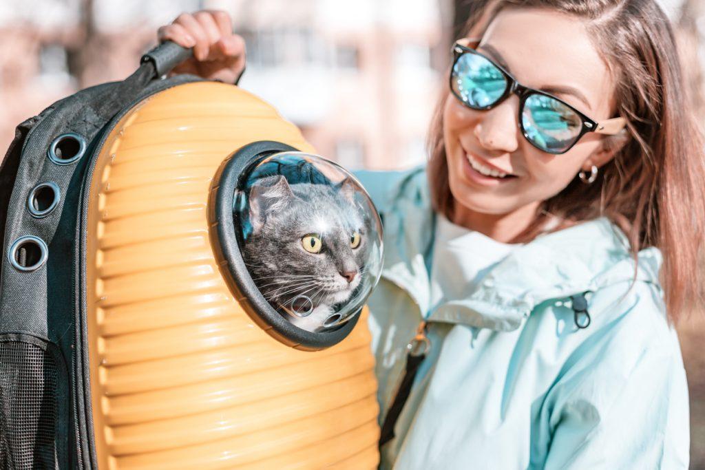 iStock 1300655420 1024x683 Quer viajar com cachorro ou gato? Leia o guia definitivo de viagens com pet!