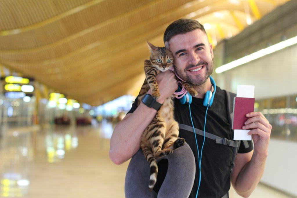 iStock 970175826 1024x683 Quer viajar com cachorro ou gato? Leia o guia definitivo de viagens com pet!